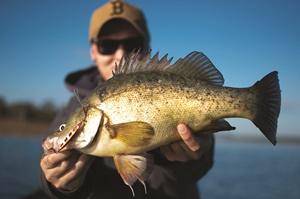 fish light winter bite