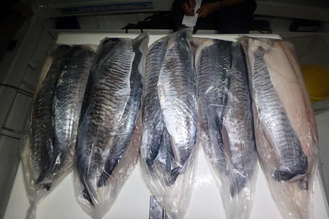 possessing too many mackerel