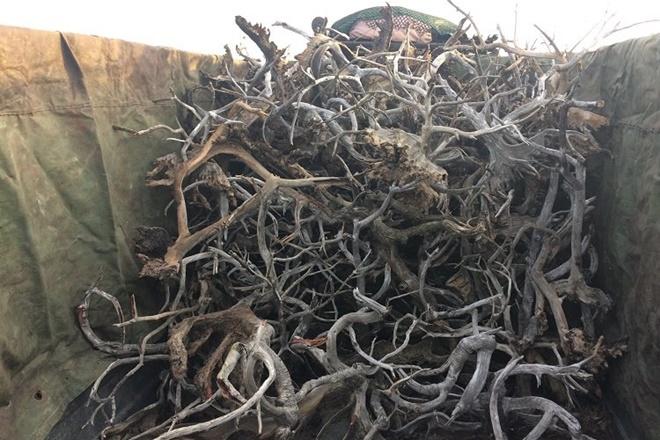 mangrove fine qld