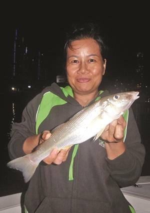sportfishing gold coast