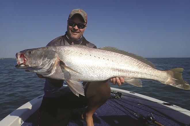 jewfish throughout moreton bay