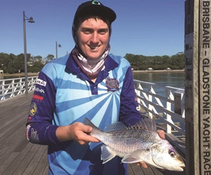 fish numbers and size increasing brisbane