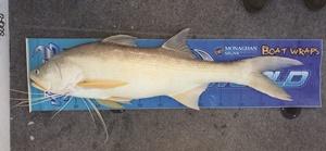 brisbane threadfin salmon