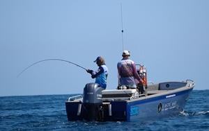 saltwater fly sailfish