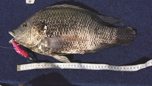 unusual fish wivenhoe