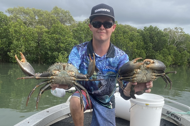 really nice mud crabs burnett river