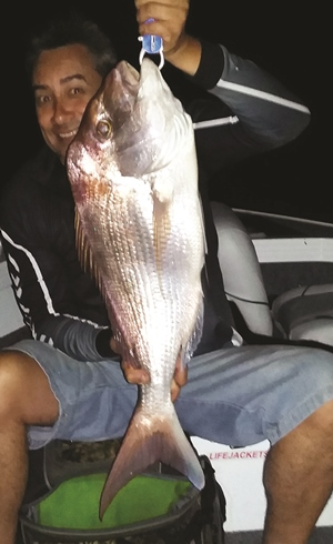 big snapper moreton bay