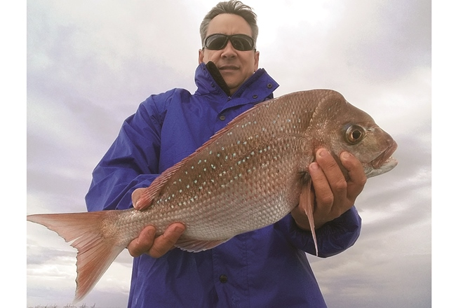 big snapper moreton bay