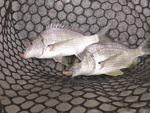 freshwater flush fishing