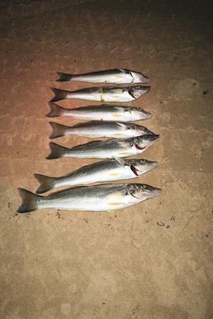 beach whiting tactics fishing